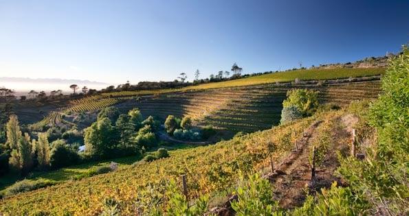 Eagles nest, en vingård i Kapstaden