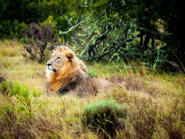 Safari äventyr i Durban, Sydafrika