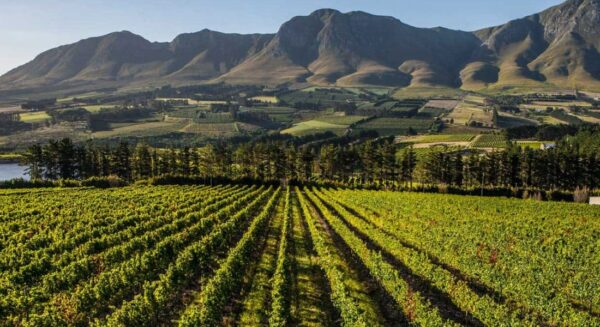Wine farm with an restaurant in Hermanus, South Africa